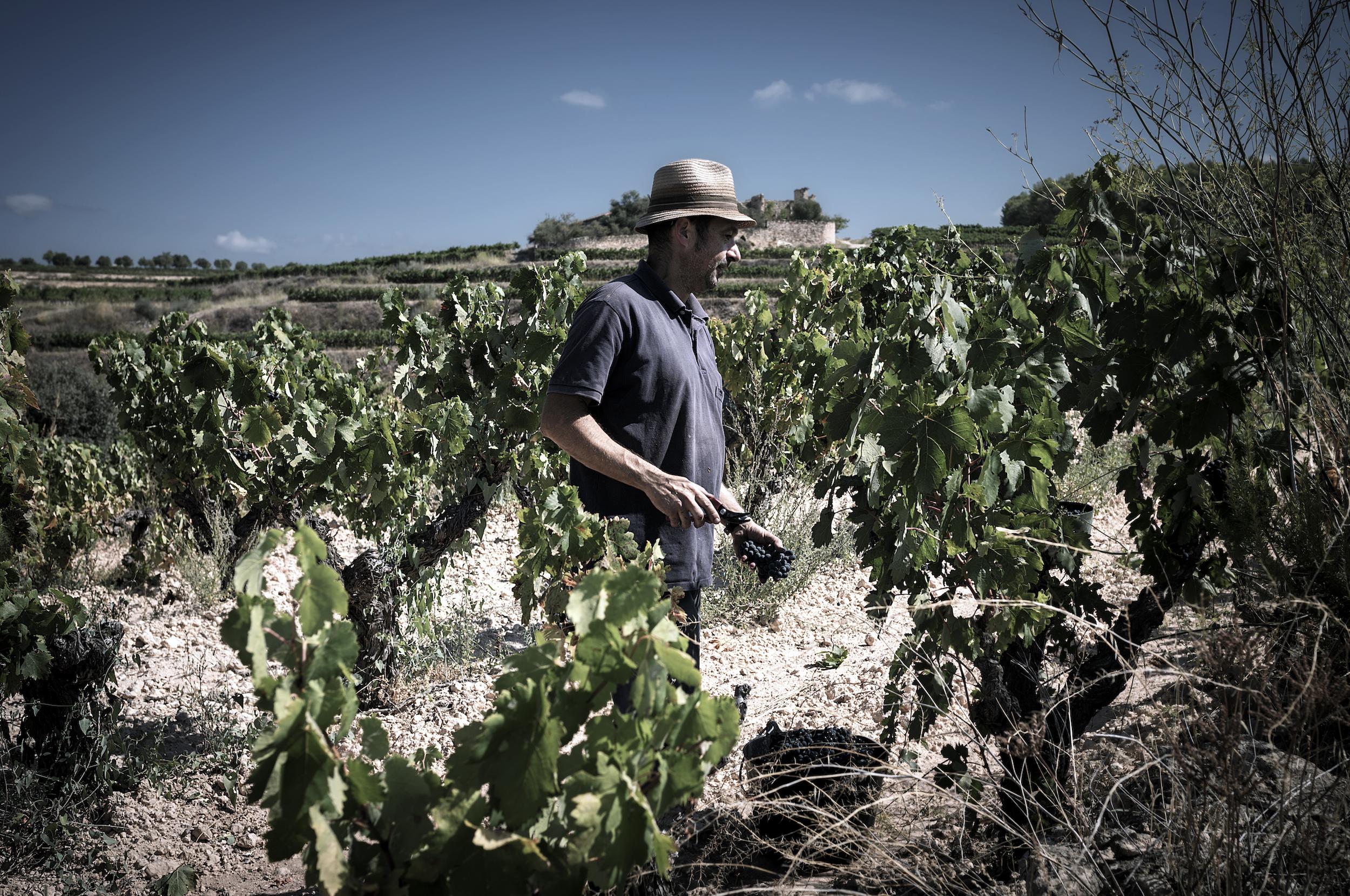 Viticultors-05