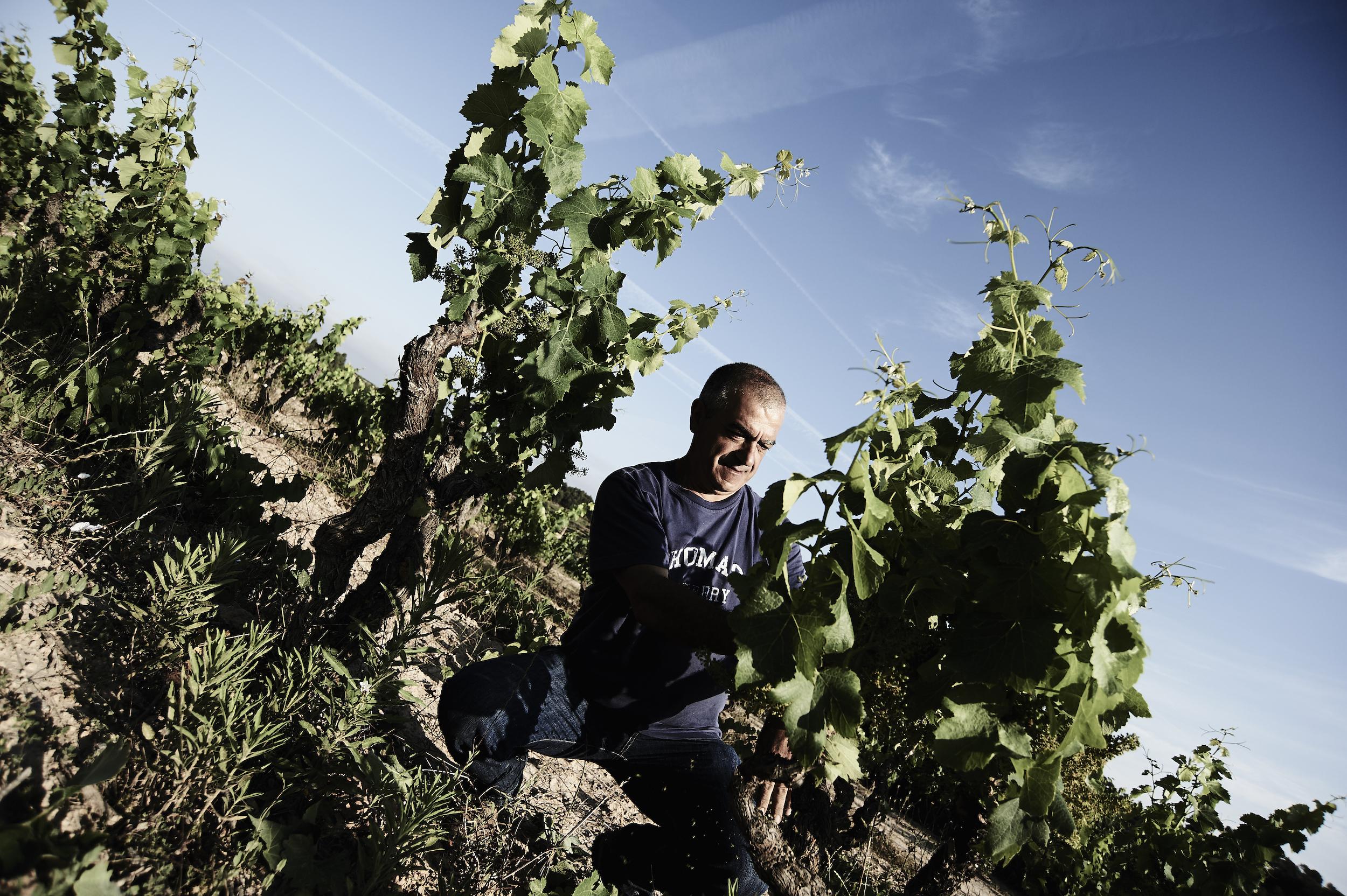 Viticultors-06